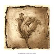 Floral Impression VIII