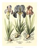 Bulb Garden I