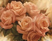 Peach Rose Splendor II