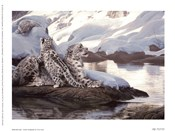 Watchful Eye - Snow Leopards