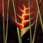 Heliconias En Naranja II