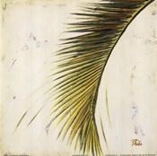 Baru Palm II