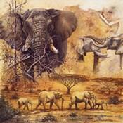 Safari II