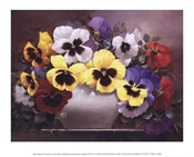 Rainbow of Pansies