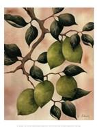 Italian Harvest - Limes