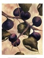 Italian Harvest - Figs