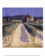 Vineyard Shadows
