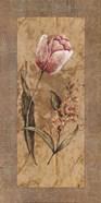 Antique Tulip