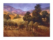 Southern Vineyard Hills