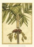 Small Graphic Palms II