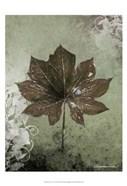 Dry Leaf I