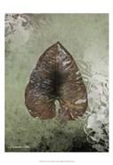 Dry Leaf II