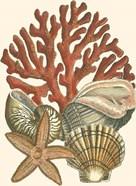 Small Coral Medley I