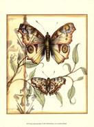 Mini Tandem Butterflies I