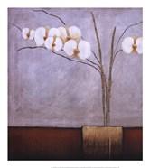 Orchidee I