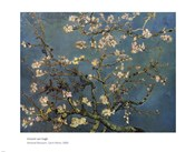 Blossoming Almond Tree, Saint-Remy, c.1890