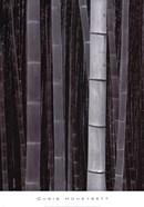 Bamboo #4, Kyoto