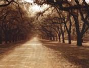 Savannah Oaks II