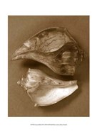 Sensual Shells II