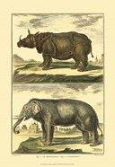 Diderot's Elephant and Rhino
