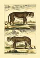 Panther and Leopard