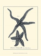 Indigo Starfish II