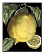 Fragrant Citrus I
