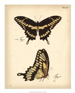 Butterfly Profile I