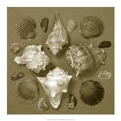 Shell Collector Series IV