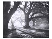 Oak Alley, Light and Shadows