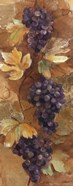Autumn Grapes II