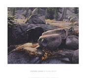 Boulder Bruin