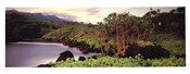 Sue Drinker - Haleakala Rim Size 15x38