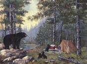 Bears Campsite