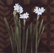 Narcissus on Brown I