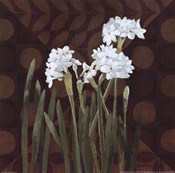 Narcissus on Brown II