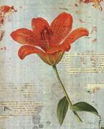 Spring Lily I