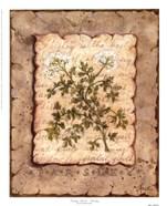 Vintage Herbs - Parsley