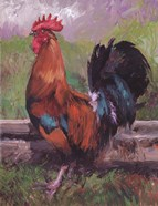 Red And Turquoise Rooster