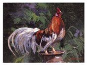 Red And White Rooster