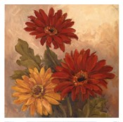 Gerber Daisies I
