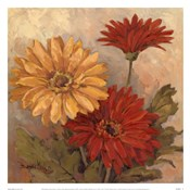Gerber Daisies II