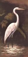 Brown Egret