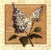 White Lilac Square