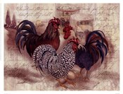 Rooster Trinity
