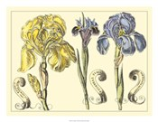 Iris in Bloom I