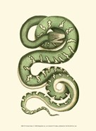 Vibrant Snake I