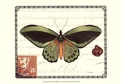 Butterfly Prose II