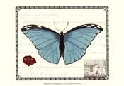 Butterfly Prose IV