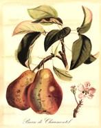 Custom Tuscan Fruits IV (AO)